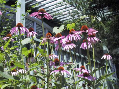 garden 1 by Denise Deby