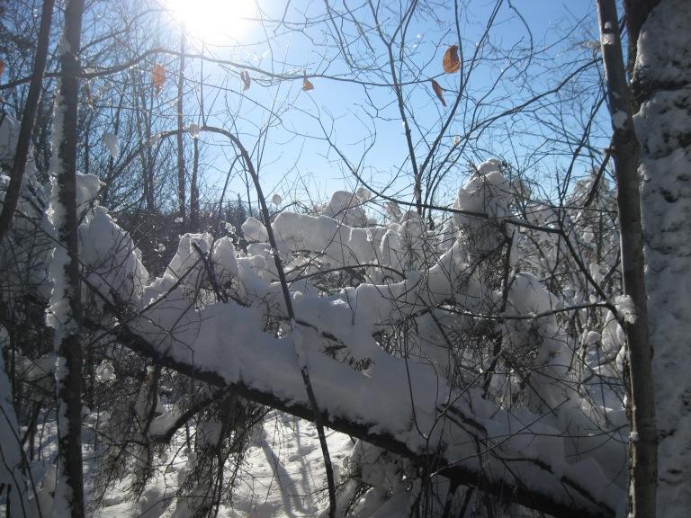 Winter wonderland - D. Smith
