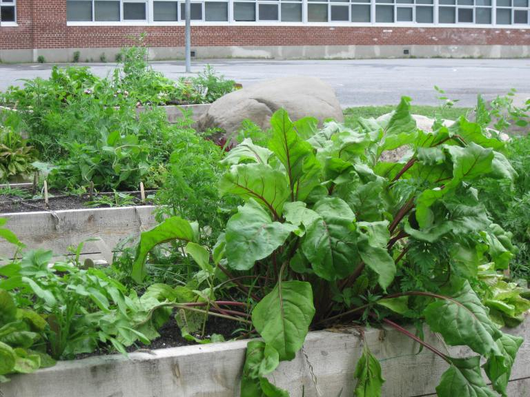 School Gardens, Broadview School - D. Deby photo