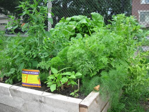 Local school garden - D. Deby photo