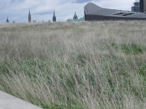 Green roof of the Canadian War Museum looking toward Parliament Hill - D. Deby photo