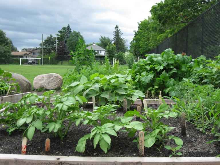 COG OSO-supported school garden in Ottawa - D. Deby