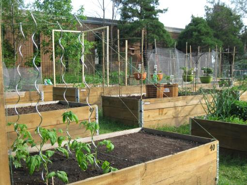 Brewer Garden Community Garden plots - D. Deby photo