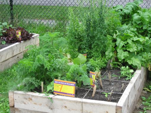 School garden and seed saving - D. Deby