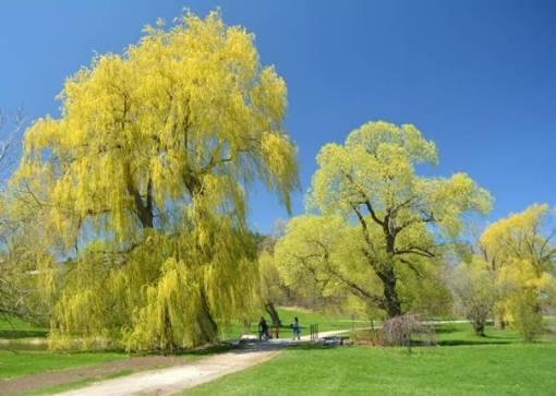 Healthy Trees--Healthy City: A Celebration of National Tree Day image courtesy City of Ottawa